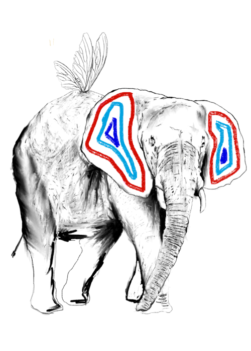 Picture of Éléphant