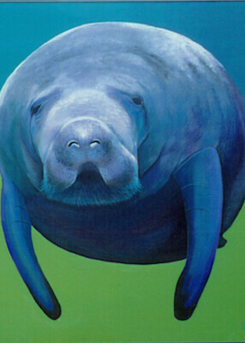 Picture of Max the Manatee